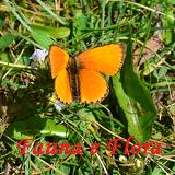 Fauna&Flora
